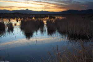 The great marsh II by pestilence