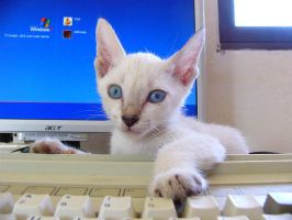 Cat got your Keyboard? by sethness