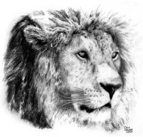 Lion by deepset