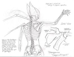 Anatomy of a Hawkgirl by Promus-Kaa