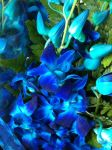 Flowers that are blue, like my mood by Rayshiro-Yue