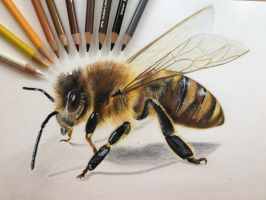 Bee by Arejka