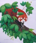 Red Panda by WindSong83