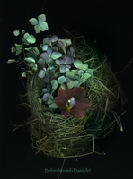 Nest with flowers by rustymermaid