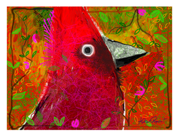 Red Cardinal by altergromit