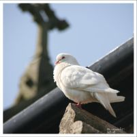 KING HENRY V111th DOVE by GeaAusten