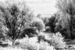 Pinhole IR Photography 4 by Okavanga