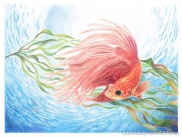 2013-01-13 WIP Fish 60 by kelch12