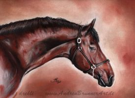 Oldenburger Stallion by Drehli