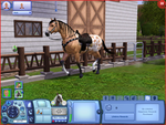 Appaloosa Sims 3 by littleart5