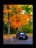 Fall Foliage by emizael