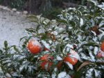 Snow on Oranges by ryanparsons7