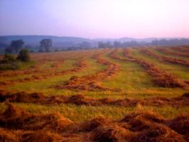 I miss the Hay by sej