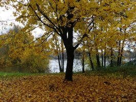 Yellow November by Caillean-Photography