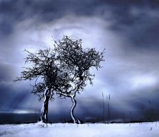 Snow on Broughy's Hill by hold-steady