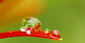 Water Droplet On Flower 4 by a6-k