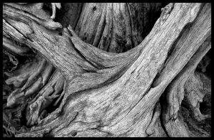 Stretched and Shredded II by AForAdultery