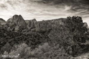 The Juniper and Kolob BW by mjohanson
