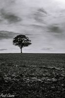 Tree in the field. Black and White by chivt800