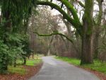 Canopy Road by Eris-stock