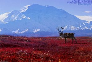 The Red Hues Of The Tundras by V-Kenith-Rathathian