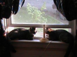 Two Cats in a Window by StormyPwny