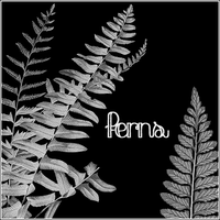 Ferns by butnotquite