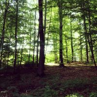 Photography: Forest by bakaprincess85