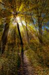 The colors of Fall... _82_ by my-shots