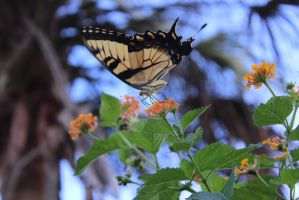 Butterfly 0612 by Maggiesdaisy