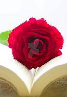 R for Red Rose by princess-reme