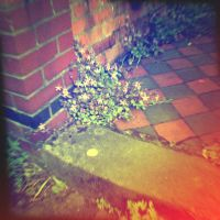 Holga 20 - Urban Wild Flower by uselessdesires