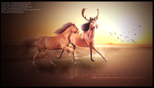 WONDERWALL by equinestudios