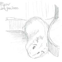 Piper 24 Jan 2000 by Cavyman