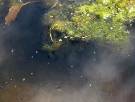Lots of Tadpoles by Lost-in-the-day