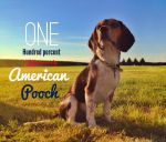 one hundred percent american pooch by Flyinfrogg