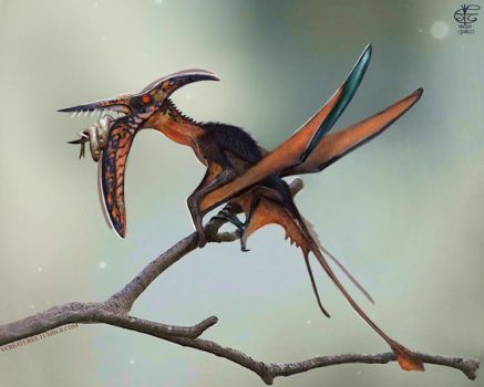 'Rhamphorhynchus' by Vincent-Covielloart