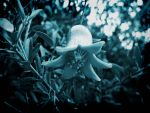 Mysterious flower by Saari89
