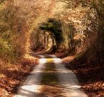 Autumn Wooden Tunnel by Notandanavn