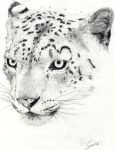 Snow Leopard by DanieleGrigo