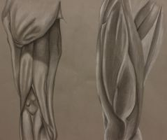 Anterior and Posterior Thigh Muscle Study by amymuffin34