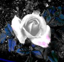 Blue Rose by Bohax