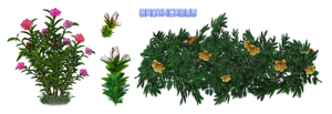 Flowers08 by brotherguy by BrotherGuy