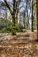 Steps to the woods by cathy001
