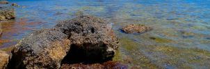 Key Largo Shore Rocks by Mindwerkz