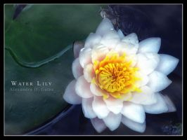 Water Lily by AlexandruGatea