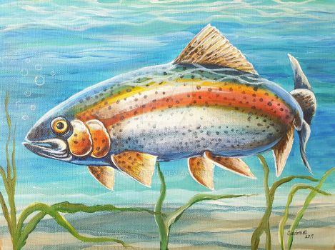 Rainbow Trout by sandralett