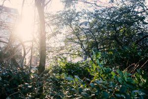 Washed out photo of trees and foilage by honestpixels