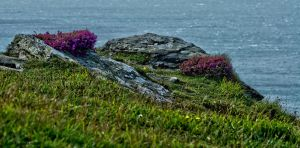 Flowers with a view by forgottenson1