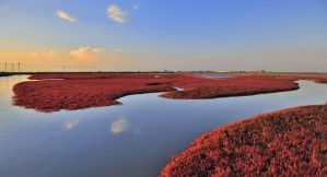 Red Seashore, Liaoning, China n DSC1904w by laogephoto